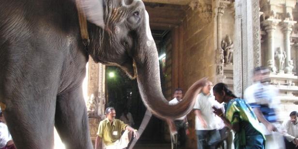 elephant-375_640sw